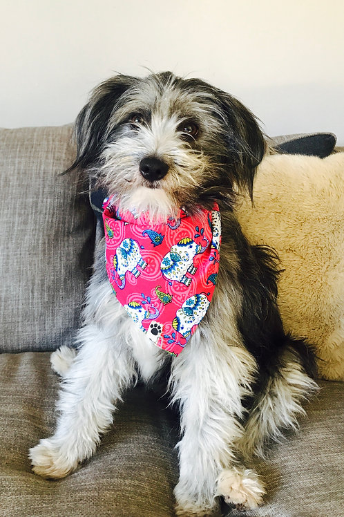 Colourful Elephants Dog Bandana