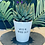 Thumbnail: 'Water me mother succa' Plant Pot