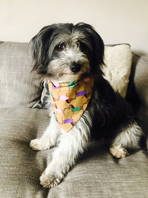 Bandana on dog collar - Sausage dog print (L)