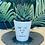 Thumbnail: 'Don't leaf me this way' Plant Pot