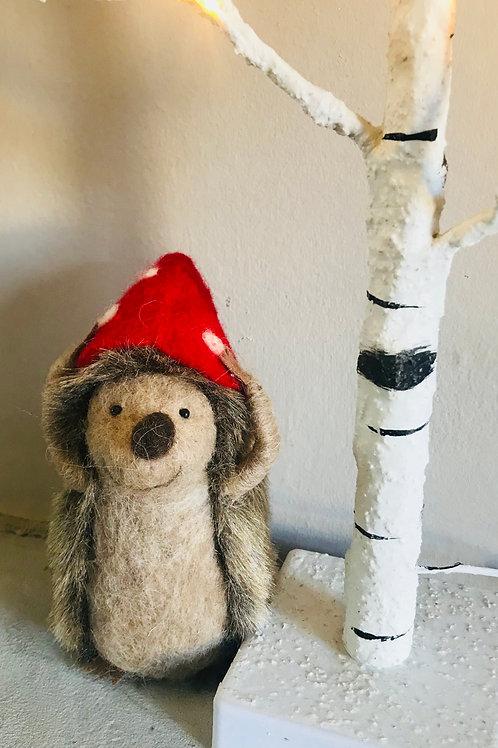 'Harry' - Woolly Hedgehog