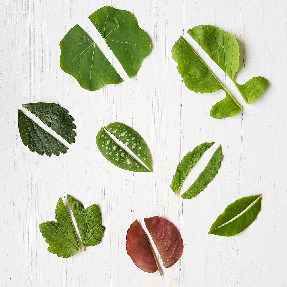 Leaf match, 12 puzzles to DIY