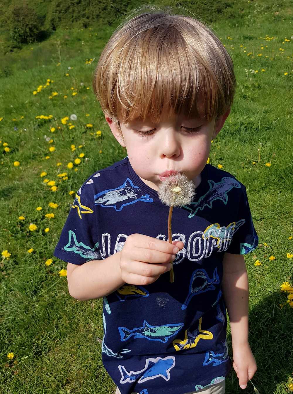 Child outdoors blowing dandelion clock