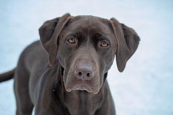 dogs2shannon-17.jpg