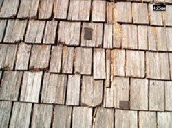 Rotting Cedar