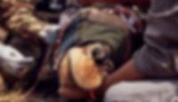 06_GiraffeTracker_TomMustill_edited_edit