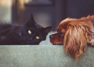 Deficiência em Animais