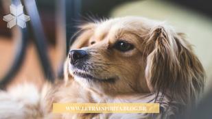 Os animais podem ver espíritos?