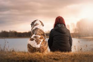 Os Seres Humanos e os Animais
