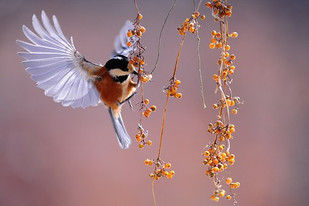 Liberta-te, Pássaro