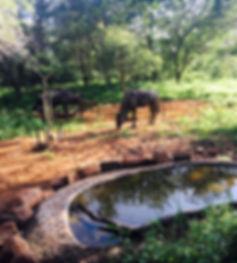 Blue wildebeest Marloth Park Kruger National Park