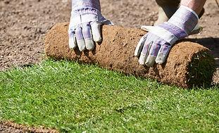 turf removal.jpg