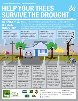help your trees survive the drought