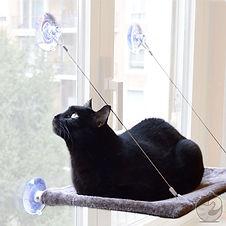 cat view.jpg