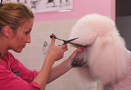 Professional dog grooming in richmond, including bath, air dry, nail clip and beed clips