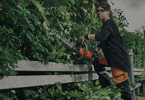 Landscape contractor trimming landscape trees and hedges with Husqvarna battery trimmer.