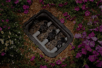 Valve box surrounded by beautiful purple flowers.