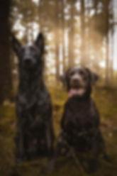 Ruff Life - Blog & Shop - Enrichment, Hundetraining, Hanf-Spielzeug