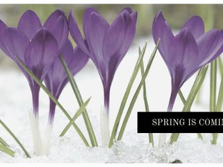 Spring is Coming! It's time to start planning.