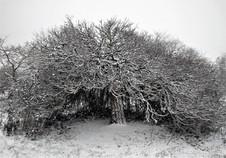 Arboretum en hiver
