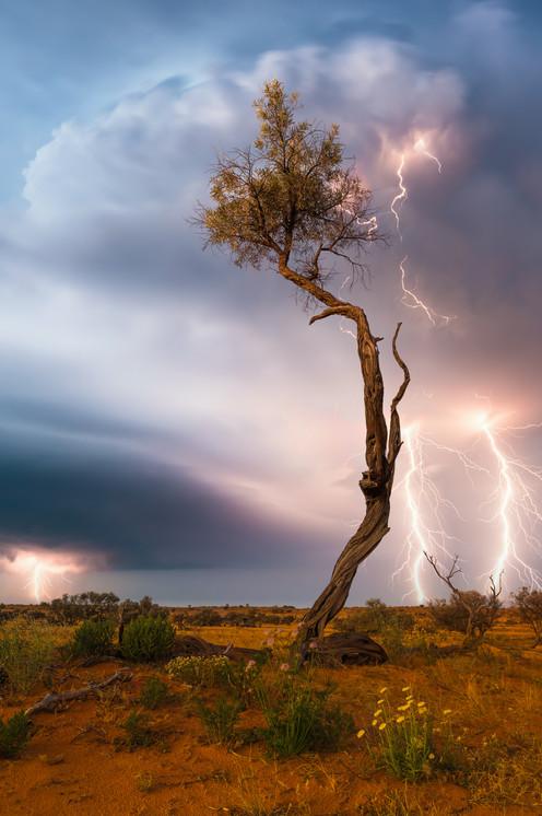 Lone Tree Lightning