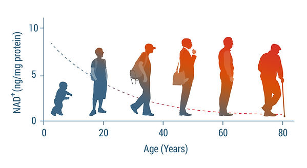nad-level-by-age-1.jpg