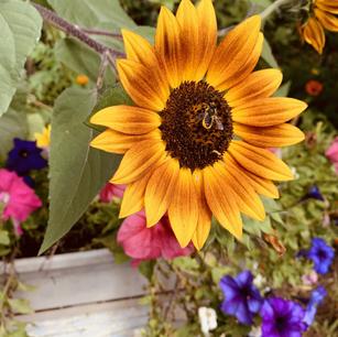Happy Lil' Sunflower