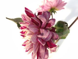 Bloemen op ShowUP