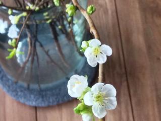 Voorjaar in huis