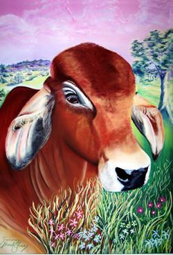 Aurelia's-Bull