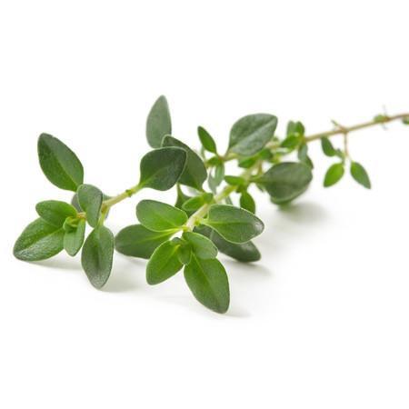 THYME LINALOOL (Thymus vulgaris)