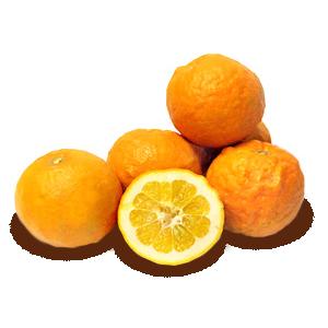 ORANGE, BITTER (Citrus aurantium)