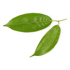 CINNAMON LEAF (Cinnamomum zeylanicum)