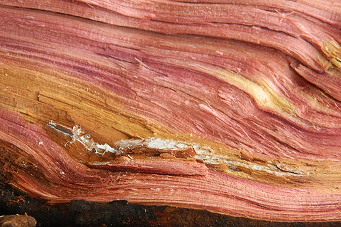 CEDARWOOD, VIRGINIA (Juniperus virginiana)