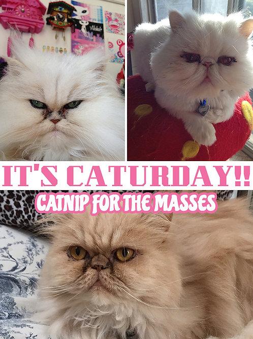 It's CATURDAY!! vol. 1 Catnip for the Masses Book