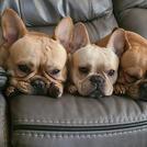 Poppy, Coqui, and Stella