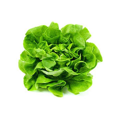Lettuce, Hydro Boston