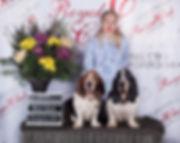 Лучшие собаки породы Бассет Хаунд