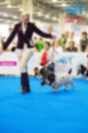 Участие в Выставке Собак