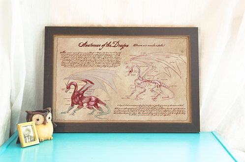 Anatomy of the Dragon // Vintage Textbook Print/Poster / Mythical Art
