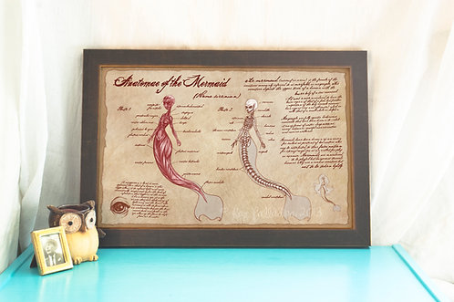 Anatomy of the Mermaid // Fantasy /Scientific Illustration/ Medical Art