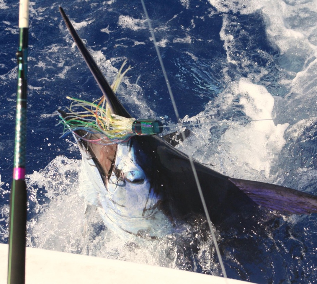 Bermuda marlin fishing