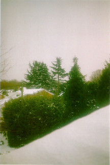 Forest in Snow film photo