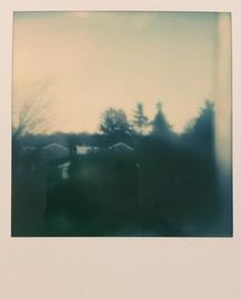 Forest Polaroid
