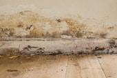 Decaying skirting boards or timber