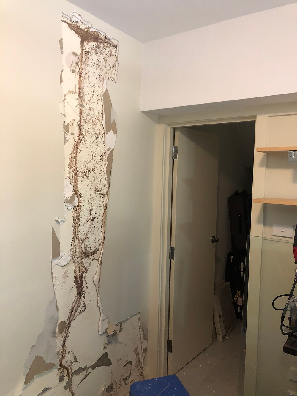 Mould to a basement wall