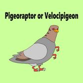 Pigeorapter
