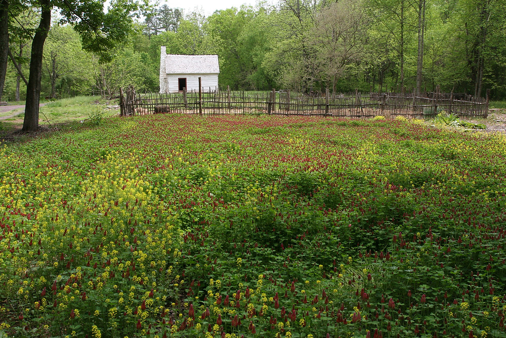 white log cabin with field of flowers