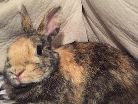 My Rabbit Carmel makes a Fun Pet