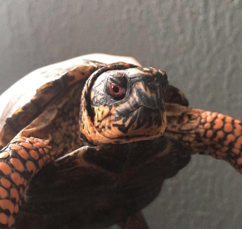 Kevin Becerra Rogelio's turtle, Vladimir Rodriguez.